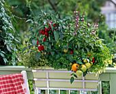 Balkonkasten mit Kräutern und Gemüse