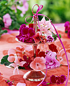 Blossoms of various pelargonium on silver etagere, ribbon