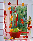 Various capsicum hung in ribbons in the window