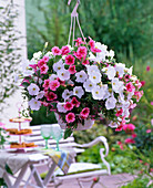 Hanging basket with Petunia 'Strawberry Frost', 'White Improved'