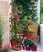 Naschbalkon mit Lycopersicon (Tomate), Capsicum (Paprika), Salvia