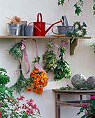 Herbs hung to dry, thymus, anethum, calendula