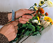 Slice Chrysanthemum (autumn chrysanthemum)