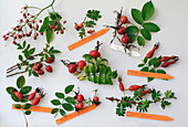 Rose (rosehip), board with various rosehips