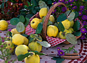 Cydonia 'Constantinople' (apple quince) in the basket