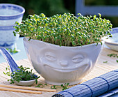 Cress in pot with face