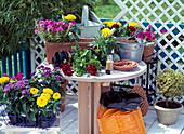 Practice Still Life with Terracotta Box, Petunia
