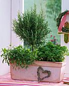 Herbs on the window, Satureja, Rosmarinus
