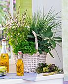 Herbs on the window, Ocimum, Petroselinum