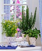 Herbs on the window, Origanum, Rosemary, Salvia