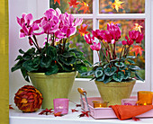 Cyclamen, ball with autumn leaves, lanterns, tray