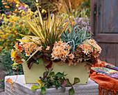 Autumn Magic, Chrysanthemum Yahou 'Peach' (Autumn Chrysanthemum)