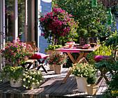 Wooden terrace with bougainvillea, petunia (petunia), argyranthemum