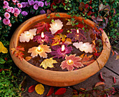 Leaf-shaped floating candles in bowl with water and autumn Acer leaves