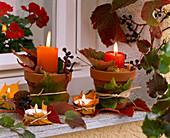 Herbstlaub von Parthenocissus (Wildem Wein) und von Acer (Ahorn) um Töpfe