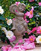Camellia (Camellia) and tambourinspielende stone figure
