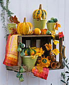 Cucurbita in pots on fruit crate as shelf, autumn leaves