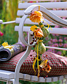 Rose, rosehips, cucurbita on the back of the chair