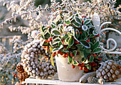 Gaultheria (checkered berry) overgrown, Larix wreath