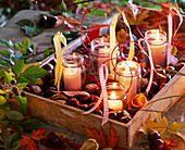 Lanterns in screw lid jars on tray with Aesculus