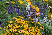 Summer flowerbed Rudbeckia hirta, Salvia farinacea, Ageratum, Antirrhinum