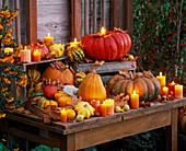 Cucurbita (edible and decorative pumpkins) with candles