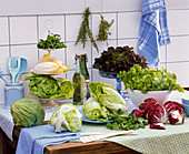 Salad in the kitchen, Lactuca