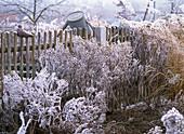 Farm garden with perennials in hoarfrost