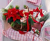 Christmas gift basket with Euphorbia pulcherrima