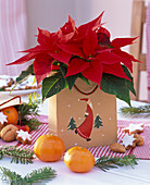Euphorbia pulcherrima in gift bag with Santa Claus