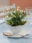 Galanthus nivalis (snowdrop) in white porcelain gravy boat