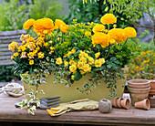 Light yellow wooden balcony box with yellow ranunculus