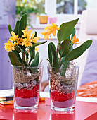 Cattleya in glasses filled with decorative sand, decorative stones, granite stones