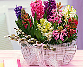 Hyacinthus, small bouquet from Salix, loop