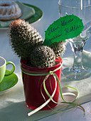 Mammillaria (wart cactus) in red glass mug with text message