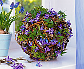 Hyacinthus flowers on Salix ball, Hedera