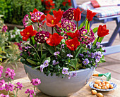 Bowl with Tulipa 'Red Paradise' (tulip), Primula auricula