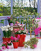 Scented balcony with Viburnum burkwoodii (scented snowball)