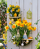 Wall Baskets Easterly-Narcissus 'Suada' 'Tete a Tete'