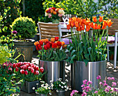 Terrace with tulips v.l.n.r. Tulipa 'Wirosa' 'Couleur Cardinal'