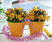Crocus (Krokusse) in Metall - Doppeltöpfen, Kette aus aufgefädelten Blüten