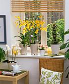 Oncidium, Phalaenopsis, Philodendron