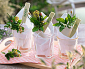 Napkin decoration with Melissa, Mentha