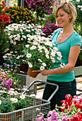 Woman buys Argyranthemum frutescens (Marguerite) in garden center