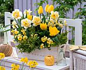 Weiß - gelber - Kasten : Narcissus 'Westward''Avalanche' (Narzissen), Tulipa
