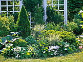 Green and white flowerbed with Picea glauca 'Conica' (Canadian spruce)