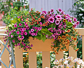 Sprinkle orange metal flower box apricot-colored