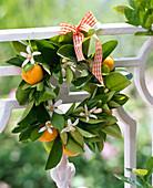 Kranz aus Citrofortunella microcarpa (Calamondinorange) mit Blüten und Früchte