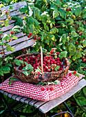 Basket with freshly harvested rubus (raspberries) on chair