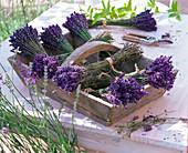Lavandula (lavender) bundled to dry in basket
